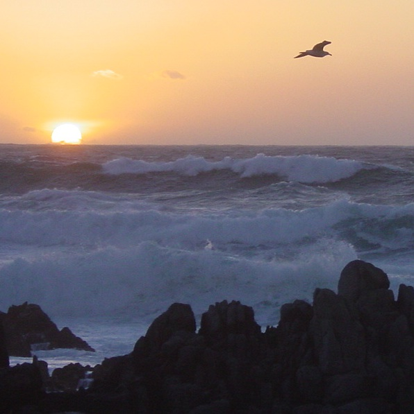 Sunset, waves, seagull.....great !